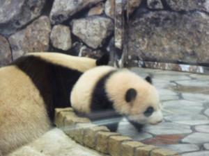 Panda2012