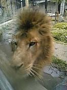 平川動物公園に行きました。寒かった〜